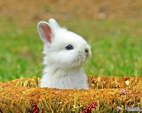 ارانب ارانب جديده ارانب حلوين ارانب 3dlat.com_1406590144