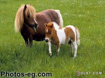 ��� ���� ������� ��� ����� ����� ��� ����� ��� ��� ������ ����� ��� ����� 3dlat.com_1406846029