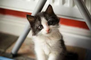 صور قطط 2015 ,صور قطط ملونه,قطط صغيره ناعمه,صور قطط كيووت 3dlat.com_1407020200