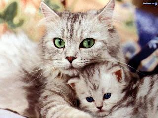 صور قطط 2015 ,صور قطط ملونه,قطط صغيره ناعمه,صور قطط كيووت 3dlat.com_1407020950