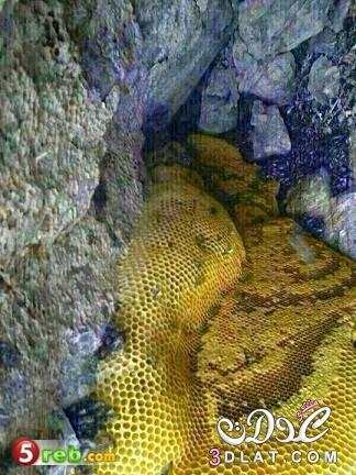 العثور على غار في احد جبال حضرموت يفيض بانهار من عسل