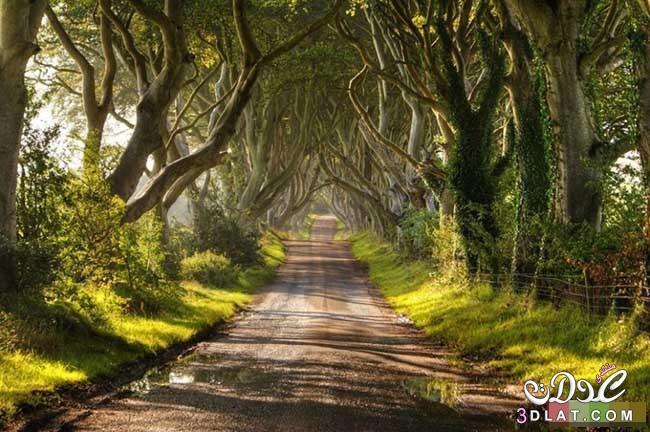 أشجار رائعة من جميع أنحاء العالم - صور اشجار نادرة سبحان الله - rare trees 3dlat.com_1410751662
