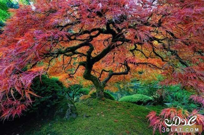 أشجار رائعة من جميع أنحاء العالم - صور اشجار نادرة سبحان الله - rare trees 3dlat.com_1410751744