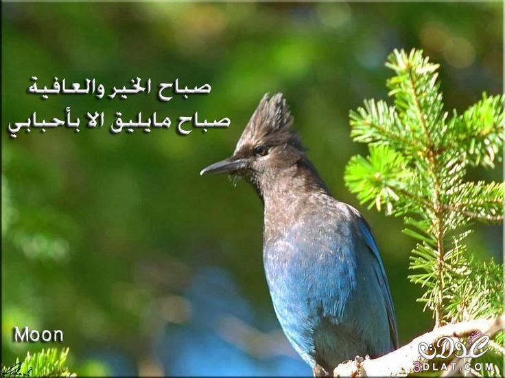 صباح الخير من الطبيعة