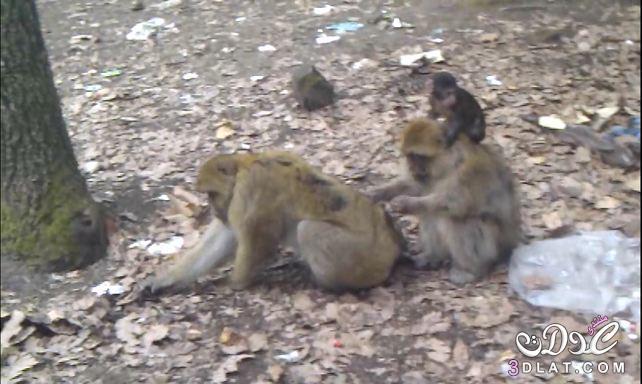 صور حيوانات وسط طبيعة خلابة - من تصويري - 3dlat.com_1413730489