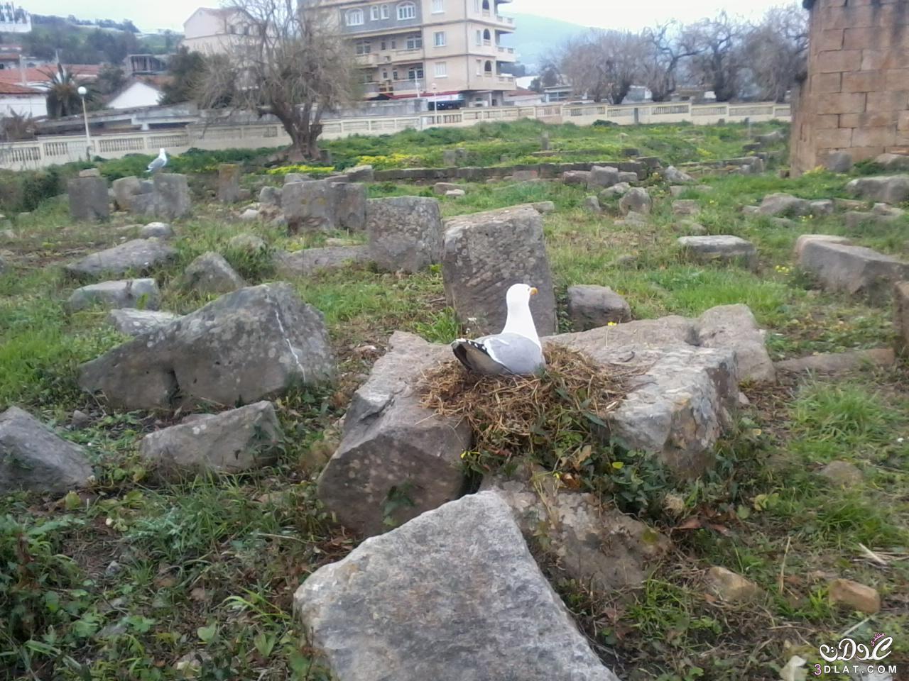 صور حيوانات وسط طبيعة خلابة - من تصويري - 3dlat.com_1413730706