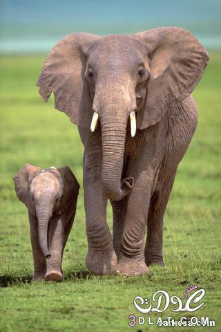 صوره فيل