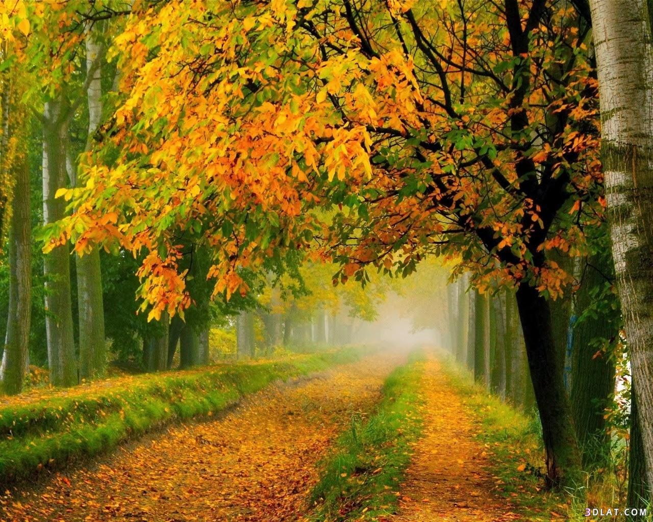 أجمل المناظر الطبيعية مناظر طبيعية خلابة 3dlat.com_14_18_13e6
