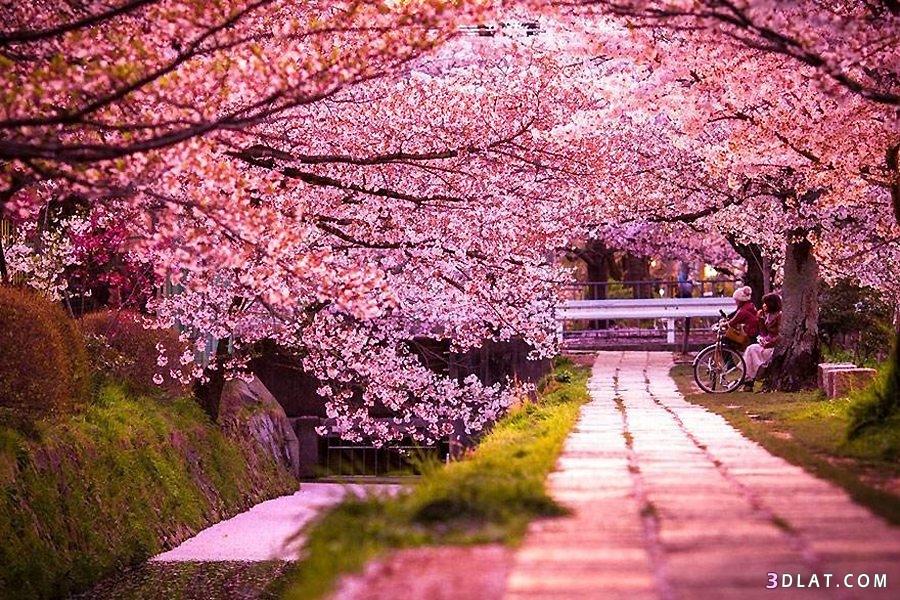 أجمل المناظر الطبيعية مناظر طبيعية خلابة 3dlat.com_14_18_3d44