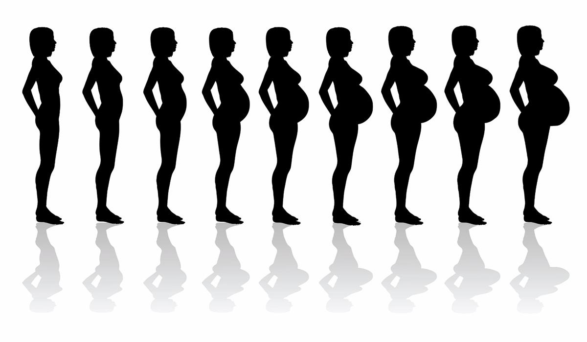 الحمل, المراحل, بالأم, بقلمي, مراحل, هذة, والجنين, يمر
