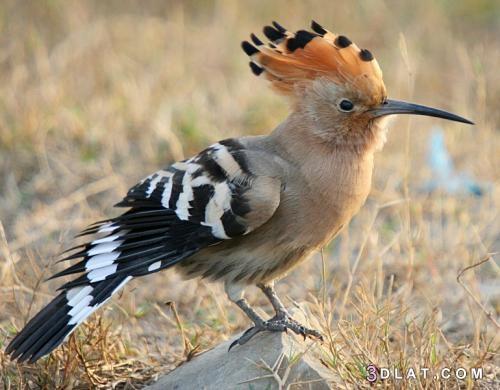 انواع الطيور المهاجرة ، معلومات عن الطيور المهاجرة 3dlat.com_14_19_e0ba_81a8642a4ca72