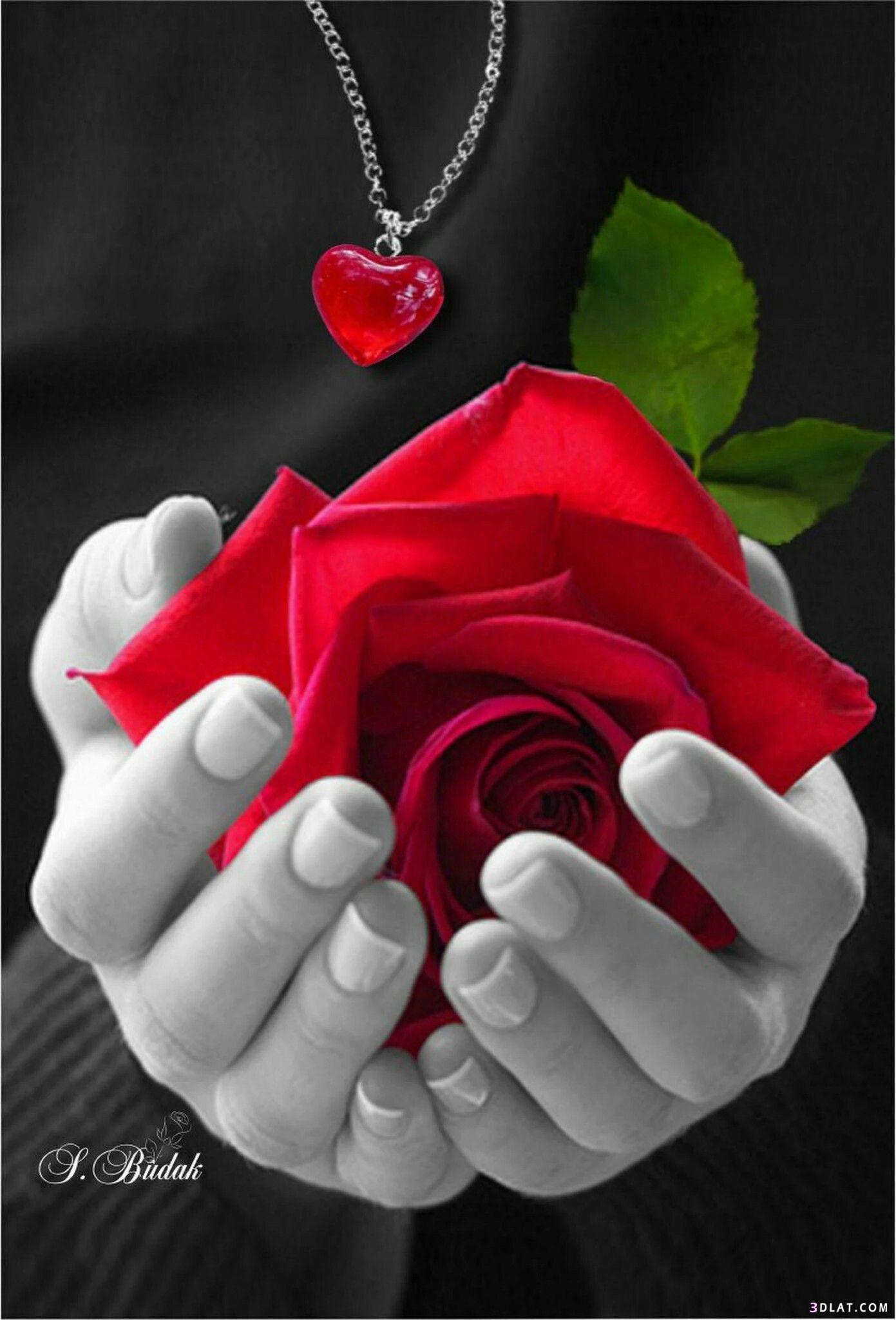 رومانسيه متحركه للاحباب للزوجين والحبيبين اجدد 3dlat.com_16_18_9c65