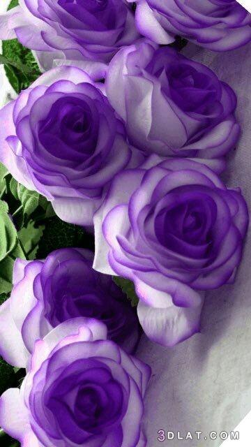 خلفيات زهور وورود، ورود ازهار طبيعيه 3dlat.com_16_19_a735