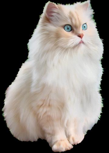 القطط, حياتها, عنها, مثيرة, وأنواعها, ومعلومات
