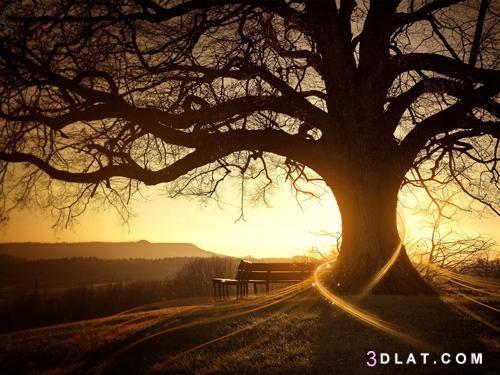 للطبيعة رائعة ،مجموعة جديدة الصور الطبيعية 3dlat.com_18_18_6672