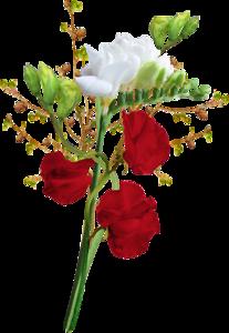 سكرابز زهور ، صور ورود وأزهار الربيع للتصميم ,سكرابز ورود بدون تحميل 3dlat.com_19_19_84df