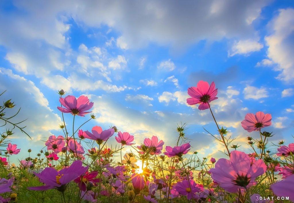 ورود رائعه.أجمل زهور2019.صور ورود مميزة. 3dlat.com_20_18_6020