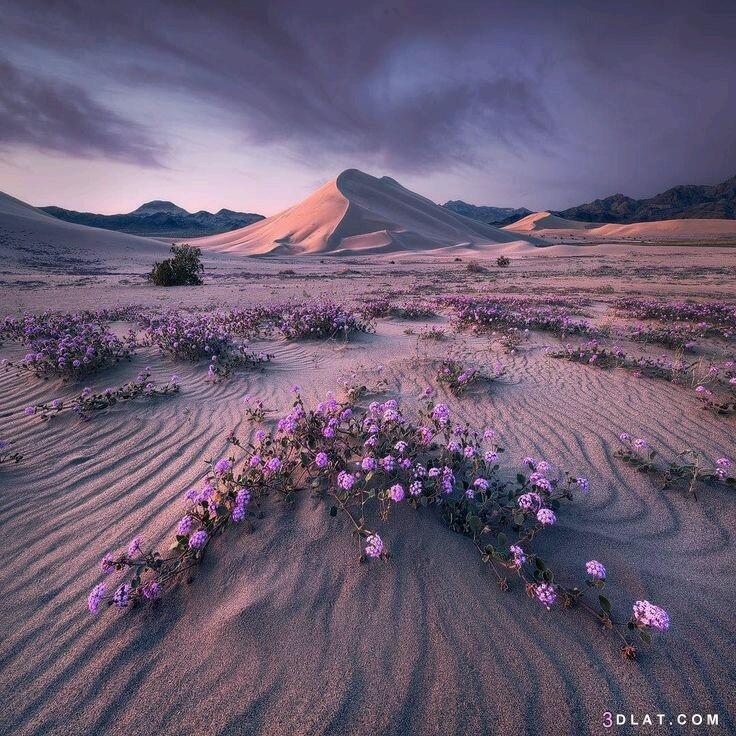 nature, pictures, الجوده.beautiful, صور, طبيعيه, عالية
