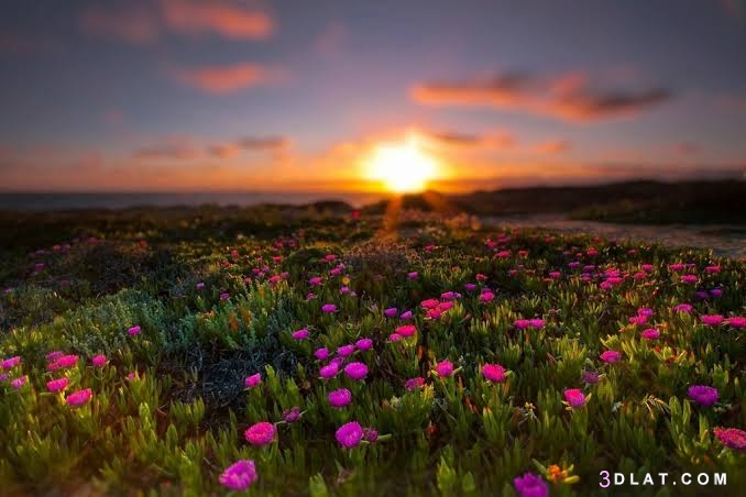 ازهار،عندما, الازهار, الشمس, تتلاقي, صور, طبيعيه, مع, ٢٠١٩, ٢٠١٩،صور