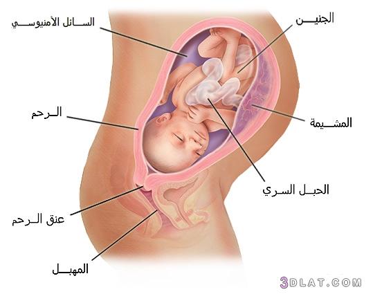 أهميته, الامينوسي, الجنين؟, السائل, حياة, ما, وتأثيره