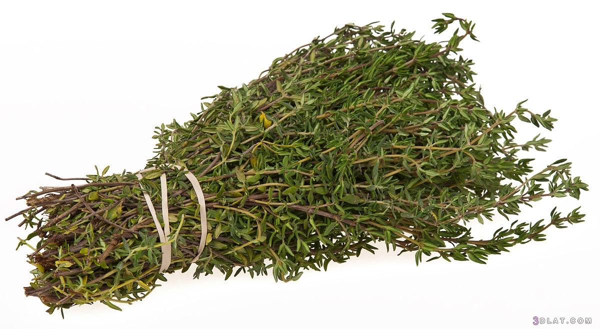 نبات الزعتر زراعته وأهميته الكبيرة 3dlat.com_21_18_3bb7
