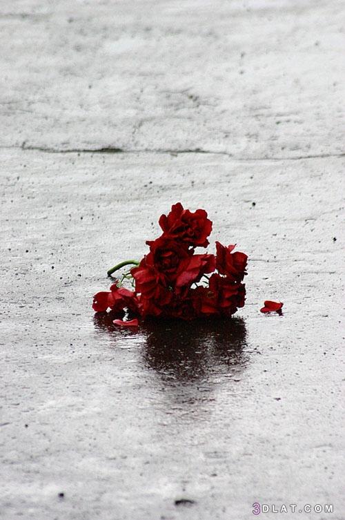 احمر, البحر،, بلدي, صور, طبيعية, والبحر, ورد, ٢٠١٩،