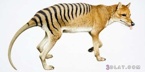 اشهر اسماء حيوانات منقرضة العالم بالصور 3dlat.com_22_18_3c69