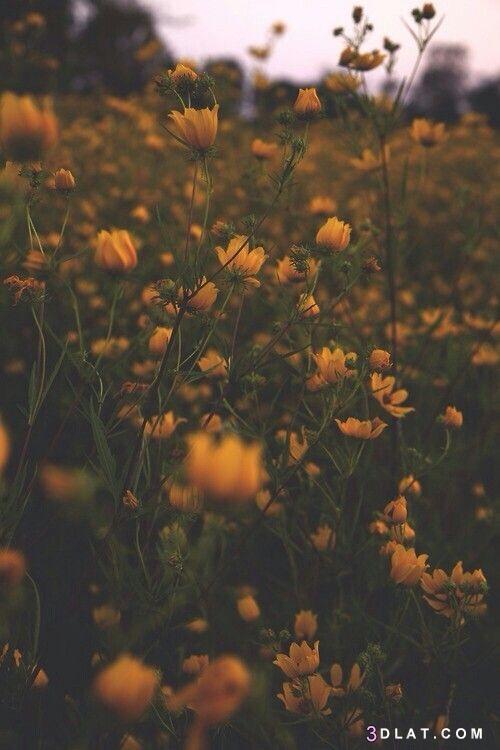 شموس, صور, طبيعية, طبيعيةرائ, متحركة, وأقمار, وثابتة, وخضرة, وزهور،, ومياه