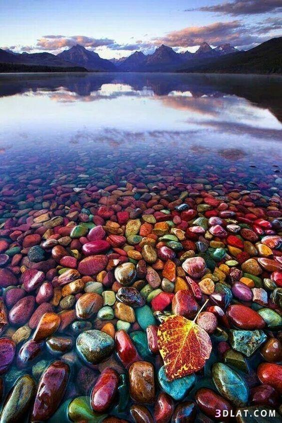 للطبيعة الخلابة وسماء ورمال وشجر وورود، 3dlat.com_25_18_63f1