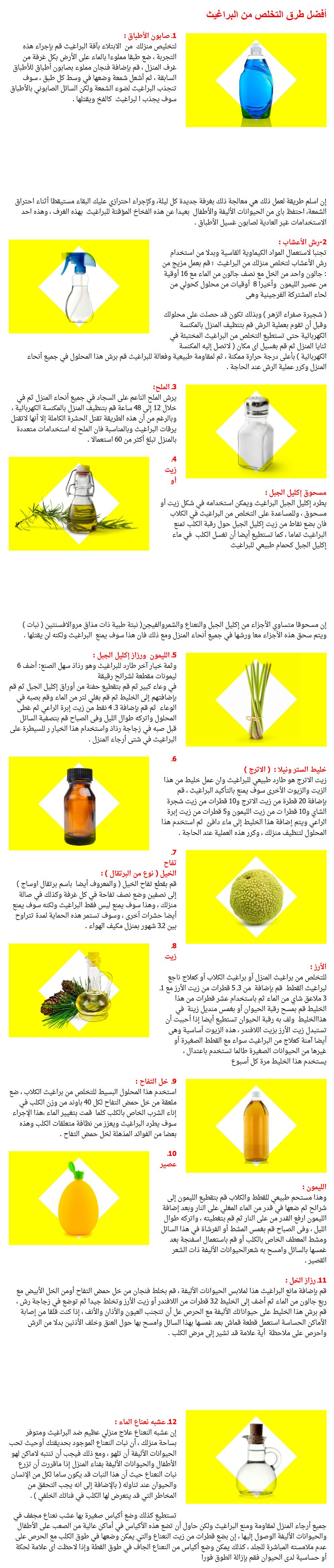 الحشرات التي تأكل البراغيث وأفضل التخلص 3dlat.com_30_18_fb5b