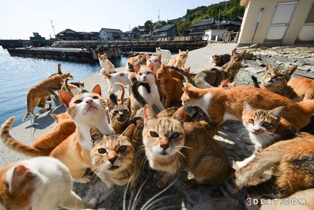الغرائب اليابان تسكنها القطط ..كيف تعيش 3dlat.com_31_18_2042