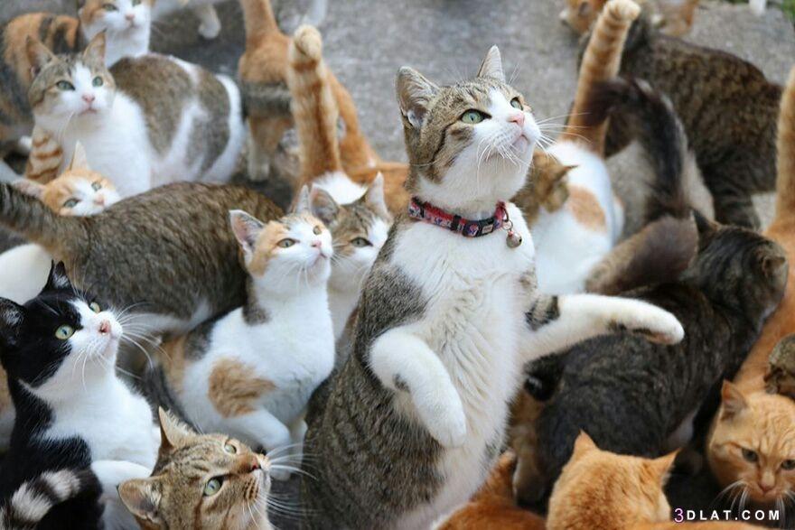 الغرائب اليابان تسكنها القطط ..كيف تعيش 3dlat.com_31_18_6db4