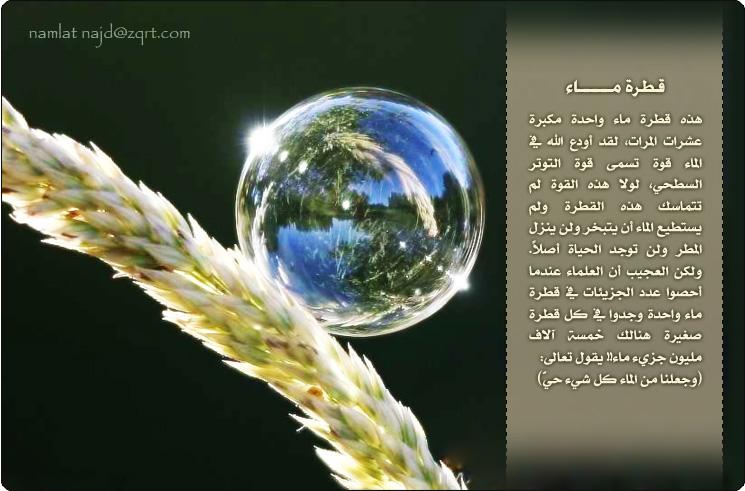 الصورة تتكلم سبحان الله..
