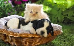 صور قطط كيوت 2015,صور قطط صغيره 2015,صور قطط جميله اجمل صور القطط , صور اجمل القطط 3dlat.com_images-002