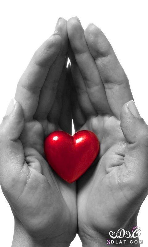رومانسية قلوب 2019 دباديب ورود 3dlat.net_01_15_7faa