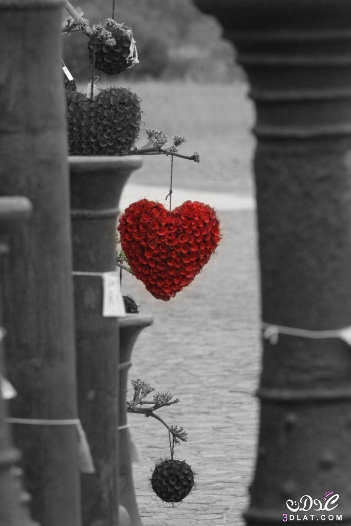 رومانسية قلوب 2019 دباديب ورود 3dlat.net_01_15_e278