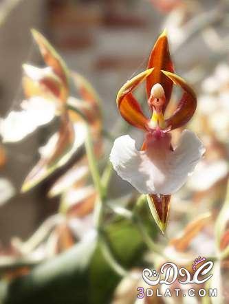 زهور غربية جدااااااااااااااا 3dlat.net_07_15_2a0a