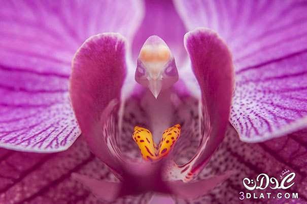 زهور غربية جدااااااااااااااا 3dlat.net_07_15_3d39