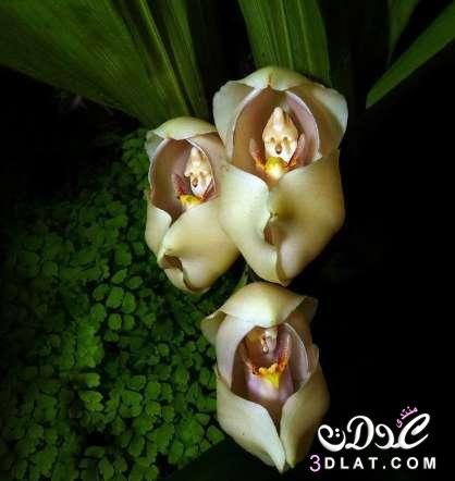 زهور غربية جدااااااااااااااا 3dlat.net_07_15_91c3