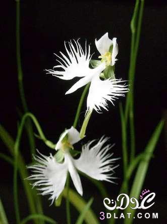 زهور غربية جدااااااااااااااا 3dlat.net_07_15_bd91