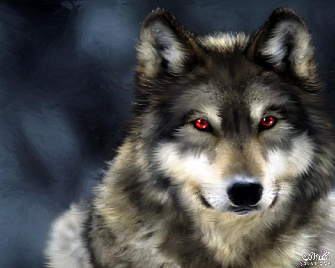 منتدى تفسير الاحلام تفسير رؤية الذئب 3dlat.net_07_15_d962