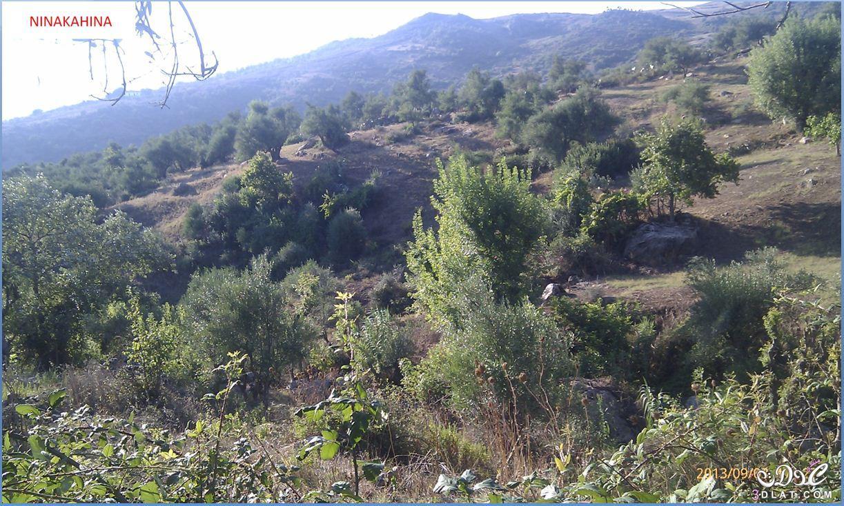 [بعدستي] صور طبيعة من تصويري صور لمناضر طبيعية جميلة و حصرية 3dlat.net_08_15_55eb