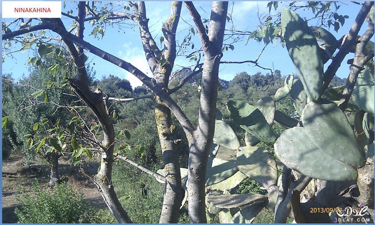 [بعدستي] صور طبيعة من تصويري صور لمناضر طبيعية جميلة و حصرية 3dlat.net_08_15_cc83