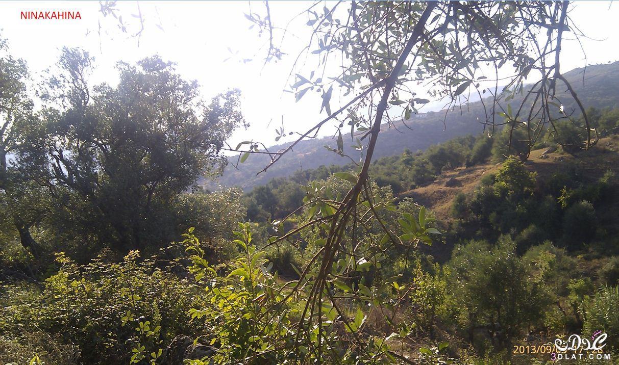 [بعدستي] صور طبيعة من تصويري صور لمناضر طبيعية جميلة و حصرية 3dlat.net_08_15_f1d7