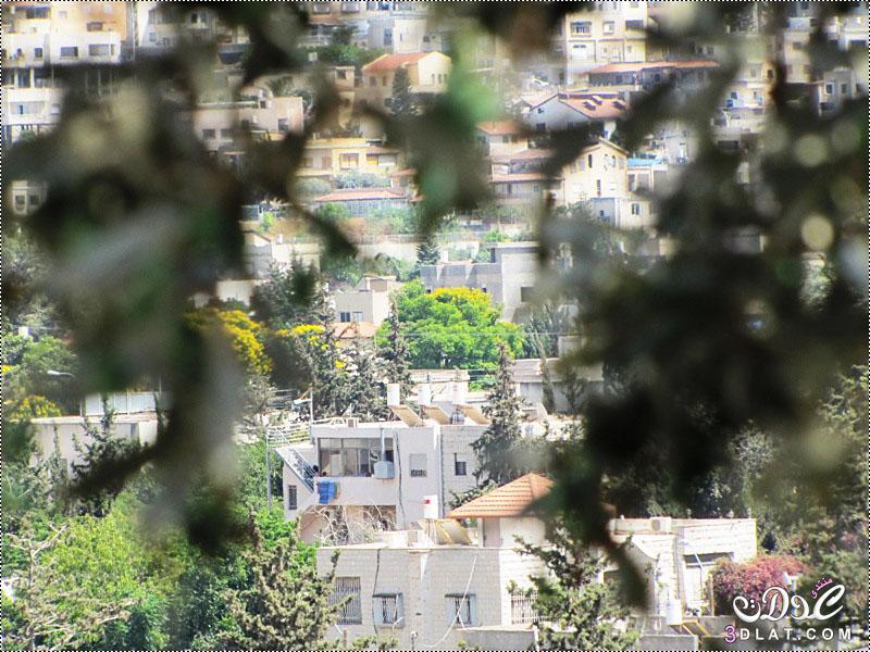 مدينة شفاعمرو الفلسطينة 3dlat.net_08_17_bbfa