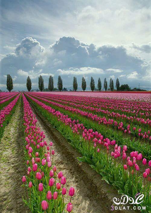 صور أزهار جميلة جدا صور طبيعية 3dlat.net_10_14IMG-2