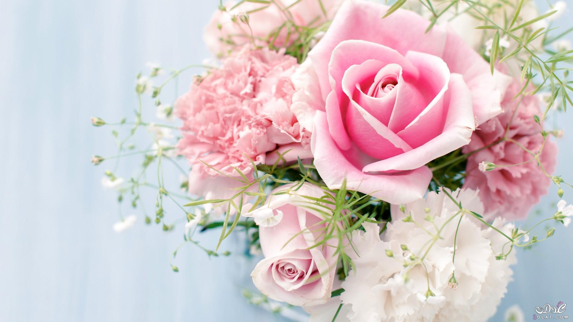 ولاية المسيلة، الولاية رقم 28 في التقسيم الإداري. 3dlat.net_13_15_f846_Roses-flowers-34758604-1920-1080