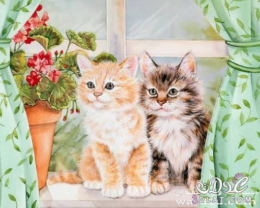 صور ا جمل القطط , احلى قطط صغيره قطط رقيقه , احلى صور للقطط , صور قطط حلو , قطط روعه 3dlat.net_15_15_17c7