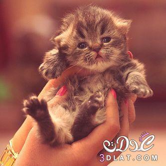 أجمل صور قطط 2015 | صور قطط رقيقة 2015 | صور قطط جميله 2016 | صور قطة ناعمه 2016 3dlat.net_15_15_24e1