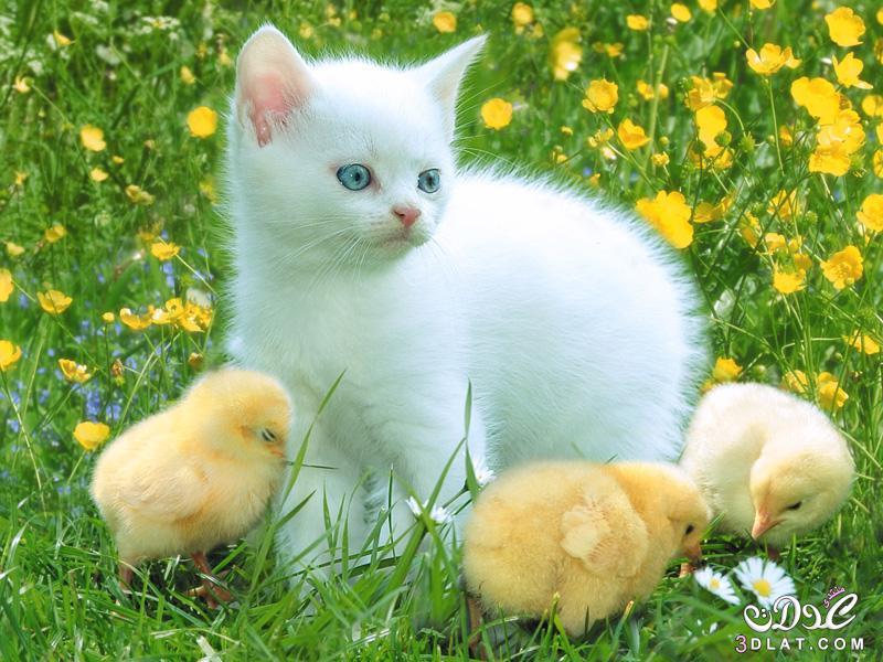 أجمل صور قطط 2015 | صور قطط رقيقة 2015 | صور قطط جميله 2016 | صور قطة ناعمه 2016 3dlat.net_15_15_371b